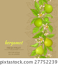 bergamot vector background 27752239