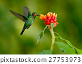 hummingbird, flower, bird 27753973