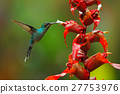 flower, bird, hummingbird 27753976