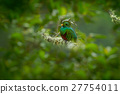 Green and red bird Resplendent Quetzal 27754011