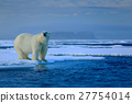 Big polar bear on drift ice edge with snow 27754014