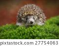 prickly,porcupine,hedgehog 27754063