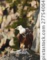 Griffon Vulture, Gyps fulvus, big birds of prey 27754064