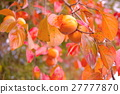 japanese, persimmon, fruit 27777870