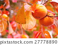 japanese, persimmon, fruit 27778890