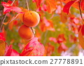 japanese, persimmon, fruit 27778891