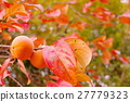 japanese, persimmon, fruit 27779323