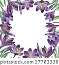 watercolor, wildflower, crocuses 27783338