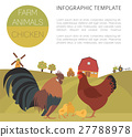 Poultry farming. Chicken family isolated on white 27788978