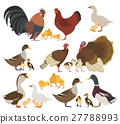 Chicken, turkey, duck, goose family 27788993