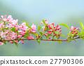 bloom, blossom, blossoms 27790306