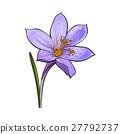 crocus, flower, spring 27792737