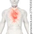 3D illustration of Heart, medical concept. 27793503