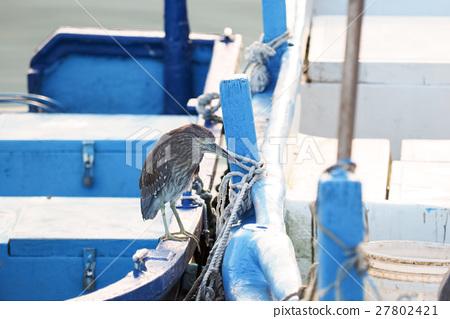 漁船上的夜鷺 27802421