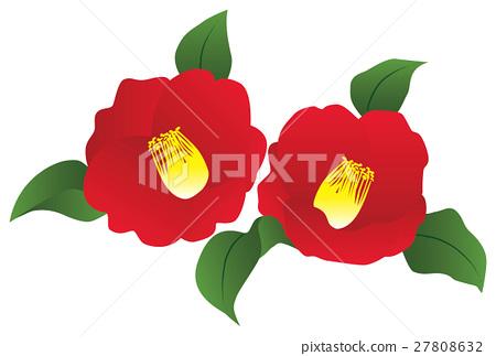 Camellia flower 27808632