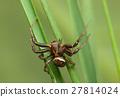 Spider on blades 27814024