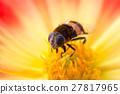 등에, 암컷, 꽃등에 27817965