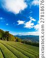 mountain fuji, mountain, tea field 27818676