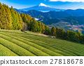 ภูเขาฟูจิ,ภูเขาไฟฟูจิ,ท้องทุ่ง 27818678