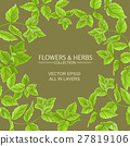 mint, herb, herbal 27819106