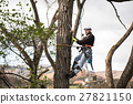 Lumberjack with saw and harness pruning a tree. 27821150
