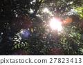 陽光葉子 27823413