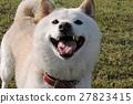 狗的笑容 27823415