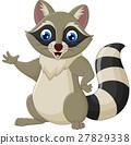 raccoon, cartoon, waving 27829338