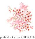 벚꽃이 만개 27832316