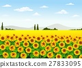 Illustration of sunflower field 27833095