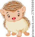 Cute baby hedgehog 27836684
