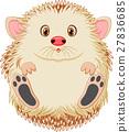 Cute baby hedgehog 27836685