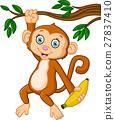 Cartoon happy monkey hanging and holding banana 27837410