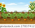 Farm background with various plant 27837412