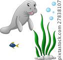Cute walrus cartoon 27838107