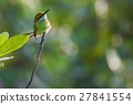 bee-eater bird avian 27841554