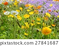poppy, bloom, blossom 27841687