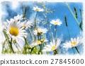 spring daisy flower field vintage 27845600