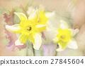 spring daffodils in garden, vintage watercolor 27845604