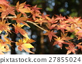 maple, yellow leafe, autumnal 27855024