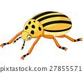 cartoon Beetle 27855571