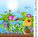 Different kinds of bugs in garden 27861463