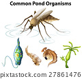 organism pond vector 27861476