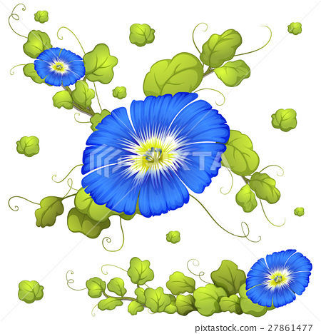 Seamless background with morning glory flowers 27861477
