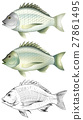 Different drawing of the same fish 27861495