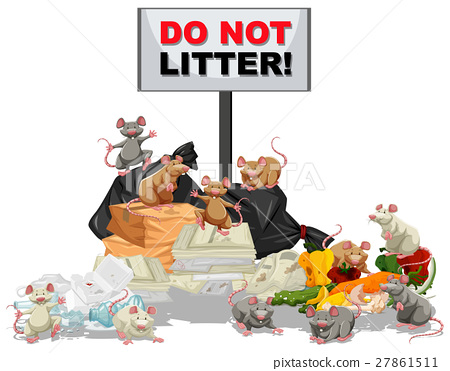 Rats searching for food at the litter pile 27861511