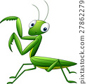 mantis bug insect 27862279