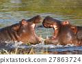 hippo hippopotamus Okavango, Botswana Africa 27863724