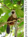 lemur, madagascar, tree 27863737