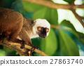 lemur, madagascar, tree 27863740